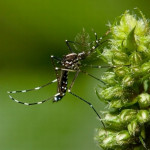 climate-change-asian-tiger-mosquito-invasive_25412