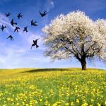 primavera copia