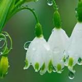 fiorellini primavera